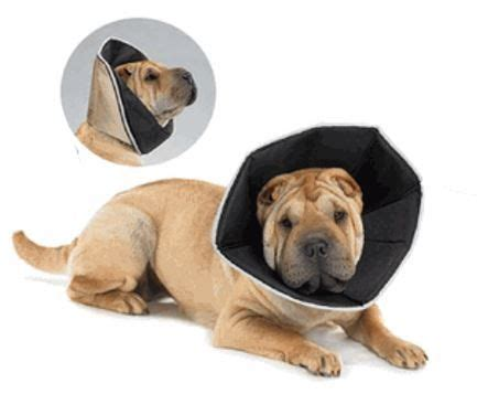how to make dog cone more comfortable 1000 ideas about dog cone on pinterest dog cone collar