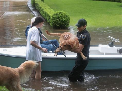 hurricane harvey rescue stranded pets rescued amid hurricane harvey flooding in southeastern abc news