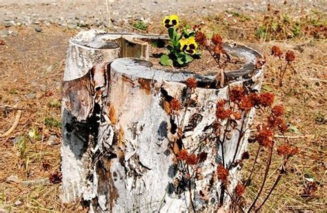 what to do with plant stump as christmas decoration outdoors recycling tree stumps for yard decorations to remove tree stumps naturally and effortlessly
