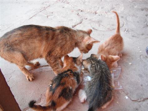 eat cat cat siobhan fallon