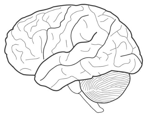 brain coloring page brain for biology science coloring sheet