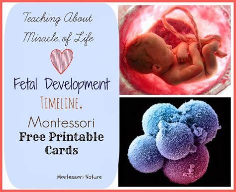 montessori printable books montessori free printable timeline of fetal development