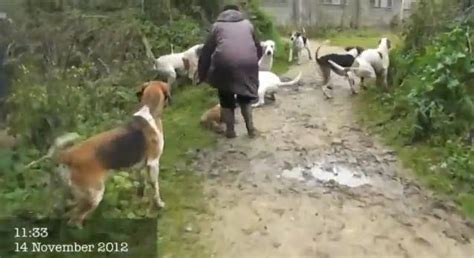 www perro coje a mujer mujer folla con pony newhairstylesformen2014 com