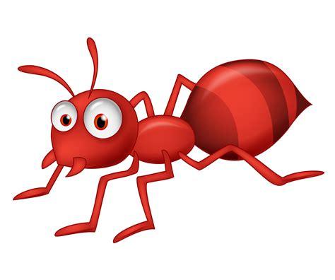 imagenes de hormigas rojas las hormigas rojas del kalahari hablando de homeopat 237 a