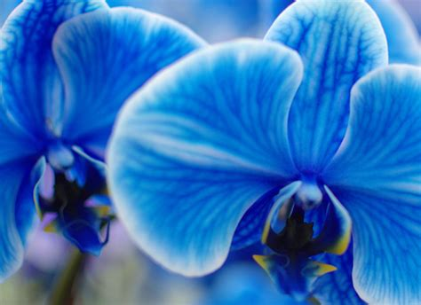 the amazing true history of orchids and what their colors