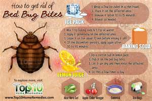 How To Treat Bed Bug Bites How To Get Rid Of Bed Bug Bites Top 10 Home Remedies