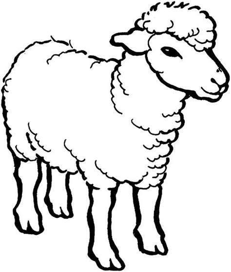 coloring pages sheep az sketch coloring page