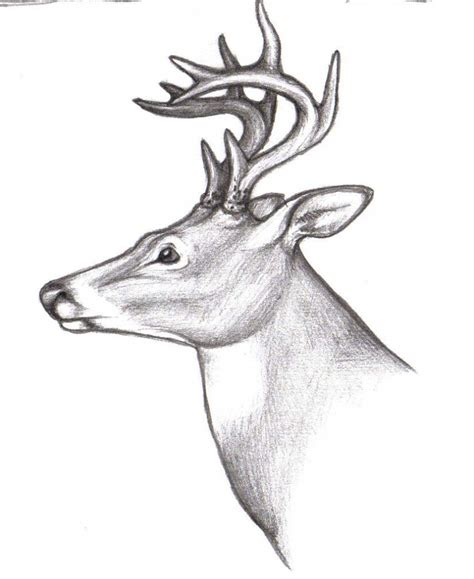 how to a deer how to draw a buck deer deer drawing clipart best pencil drawing