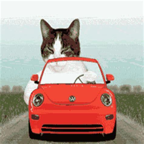 Lu Tembak Sepeda dp bbm lucu kucing naik mobil dp bbm lucu animasi bergerak