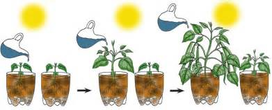 Foliage Plants Definition - experiment design independent dependent and controlled variables