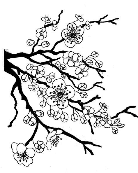 coloring pages of apple blossoms apple blossom coloring page coloring home