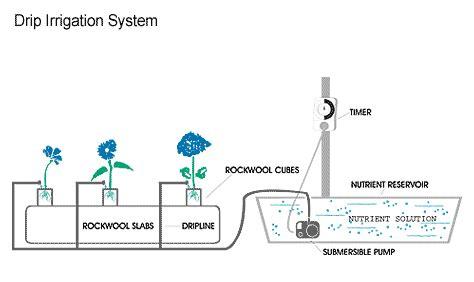 membuat hidroponik drip tutorial lengkap hidroponik drip sistem untuk pemula