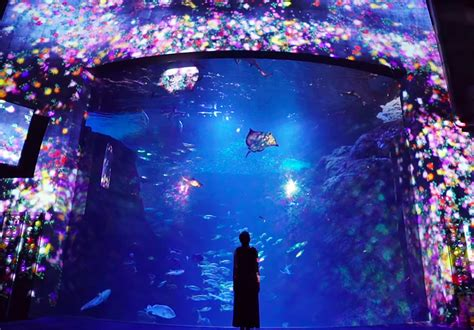 aquarium design japan teamlab projects colorful flowers on fish at enoshima