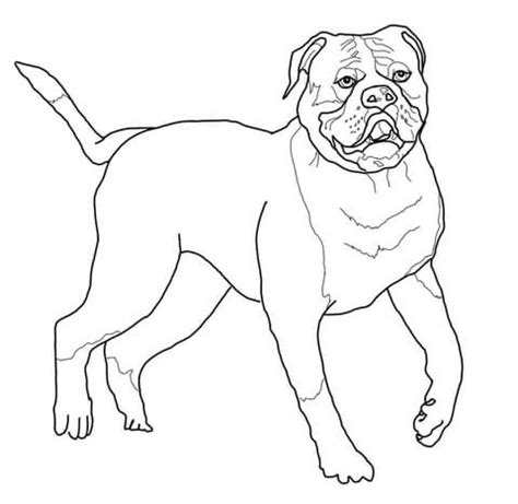 baby bulldogs coloring pages baby bulldog coloring pages quotes