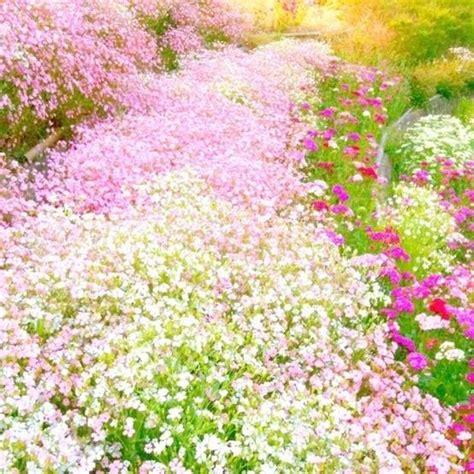 pretty plants carpet of pretty pastel flowers gardens plant love