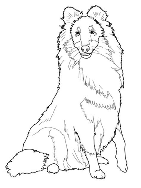 coloring pages of sheep dogs sheltie shetland sheepdog coloring page sheltir
