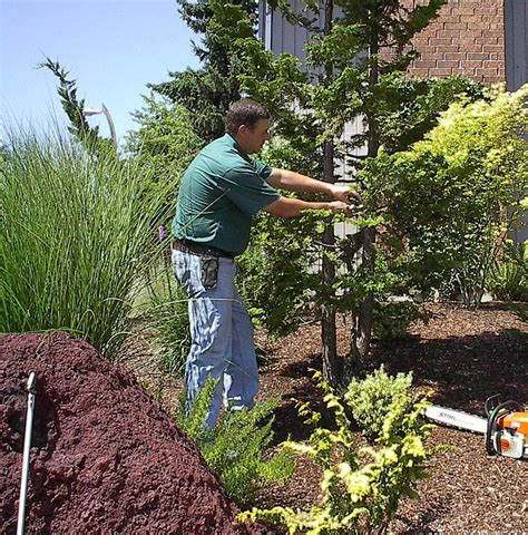 Certified Landscape Technician Definition File Arborist M D Vaden Jpg Wikimedia Commons