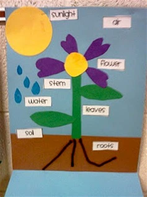 design an experiment using a seedling and a block of agar parts of a plant to grow and plants on pinterest