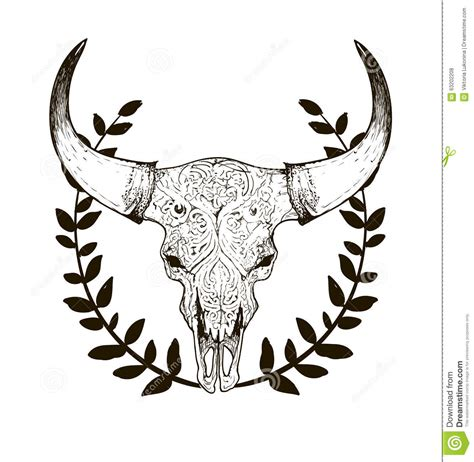 cow ckull with horns stock vector image 63202208