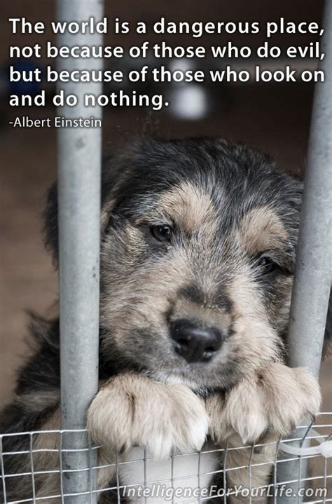 Morceguinho Homeless Wanna Adopt Him From The You Are A Photo Pool You Are A by Adopt Don T Shop No To Puppy Mills Adopt Don T Shop
