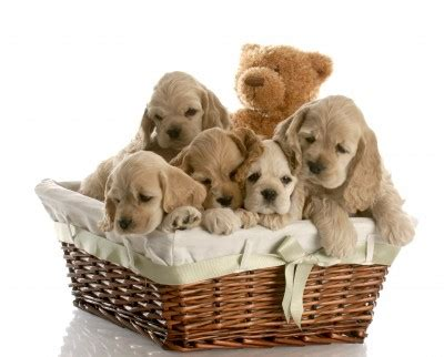 theme names for a litter of puppies girl puppy names h to j