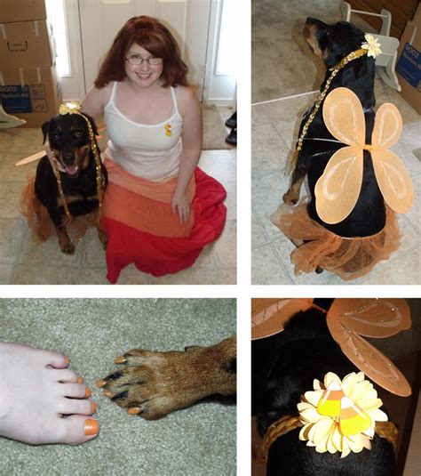 costumes for rottweilers make your a costume 6 doggone ideas 187 dollar store crafts