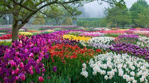 spring blooms season longwood gardens