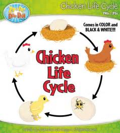 hen life cycle clipart clipartfest clipart life cycle