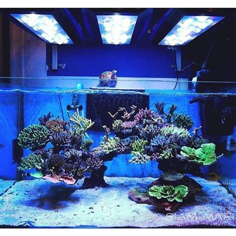 marine tank aquascaping beautiful sps dominated reef tank courtesy of nop ontour