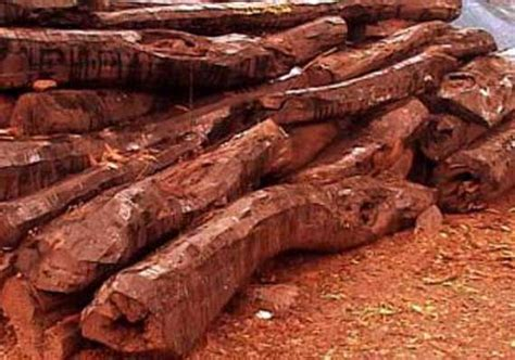 Medicinal And Cosmetic Value Of Sandalwood by Sandalwood Rakta Chandanam Cosmetic Values And