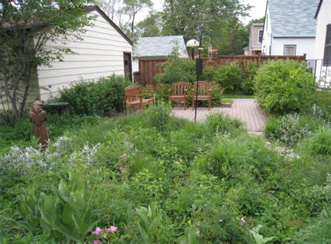 backyard bird sanctuary out back nursery landscaping services native plant gardens