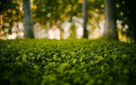 imagenes minimalistas naturaleza naturaleza verde hierba bokeh fondo borroso fondos de