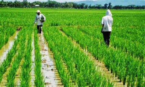 sektor pertanian  indonesia  potensi  modern