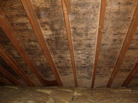 Black Mold In Attic - the geofocus mold removal mold inspection