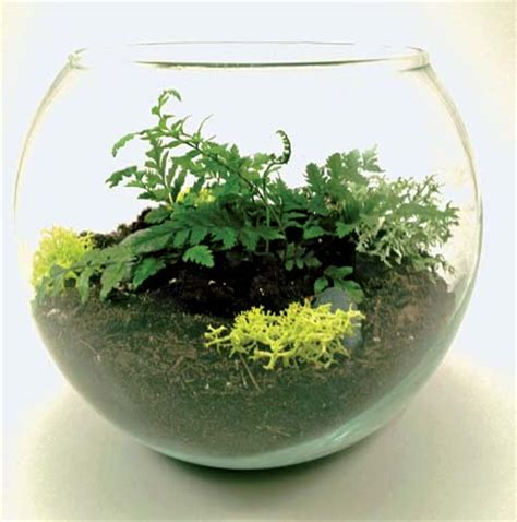 best plants for self contained terrarium terrarium design marvellous self contained terrarium best plants for a closed terrarium basic
