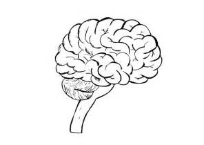 brain coloring page human brain coloring pages coloring home