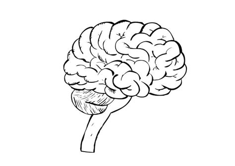 Brain Coloring Page Inner Brain Coloring Page Coloring Pages by Brain Coloring Page