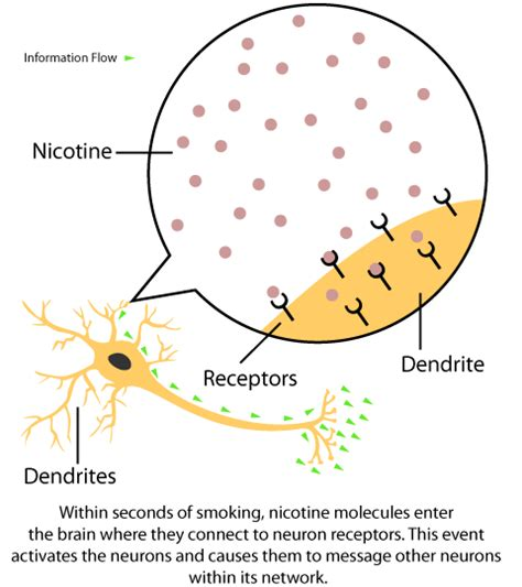 Why Does Tobacco Change Effects Of Detox Drinks by Image Gallery Nicotine Effects