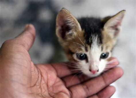 Baby Cat baby cat kitten domain pictures