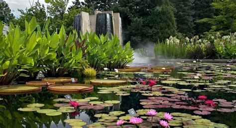 water gardens denver botanic gardens