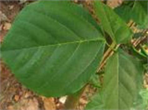 Aneka Tanaman Obat Dan Khasiatnya aneka fungsi tanaman dalam kesehatan macam macam tanaman