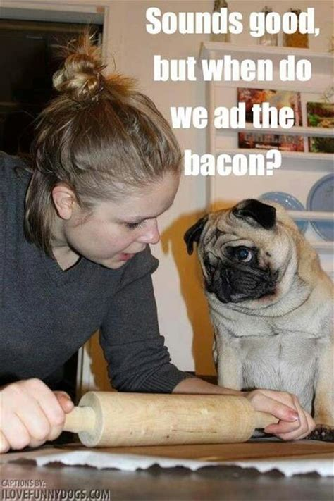 pug ad sounds but when do we ad the bacon pug memes and comics