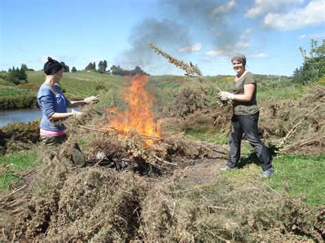 Wie Schnell Wächst Rasen Am Tag by Neuseeland Reisebericht Quot Feuer Und Flamme Quot