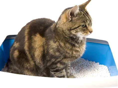 cassette igieniche per gatti la lettiera gatto
