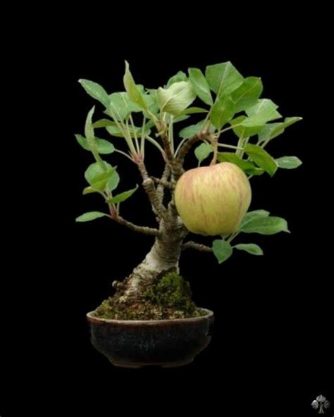 Indoor Flower Plants by Top 10 Crazy And Unusual Bonsai Trees Bonsai Empire