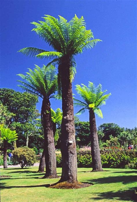 Logan Botanic Garden Wikipedia Logan Botanic Gardens