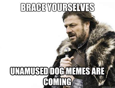 Unamused Meme - brace yourselves unamused dog memes are coming misc