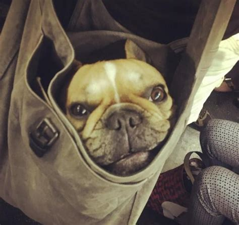 dogs on nyc subway dogs banned on the subway new yorkers it covered petslady
