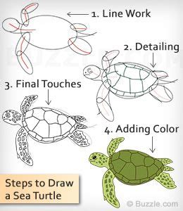 How To Draw A Baby Sea Turtle