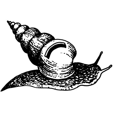 Kemeja Black Abstract White Snail file snail with a money box jpg wikimedia commons